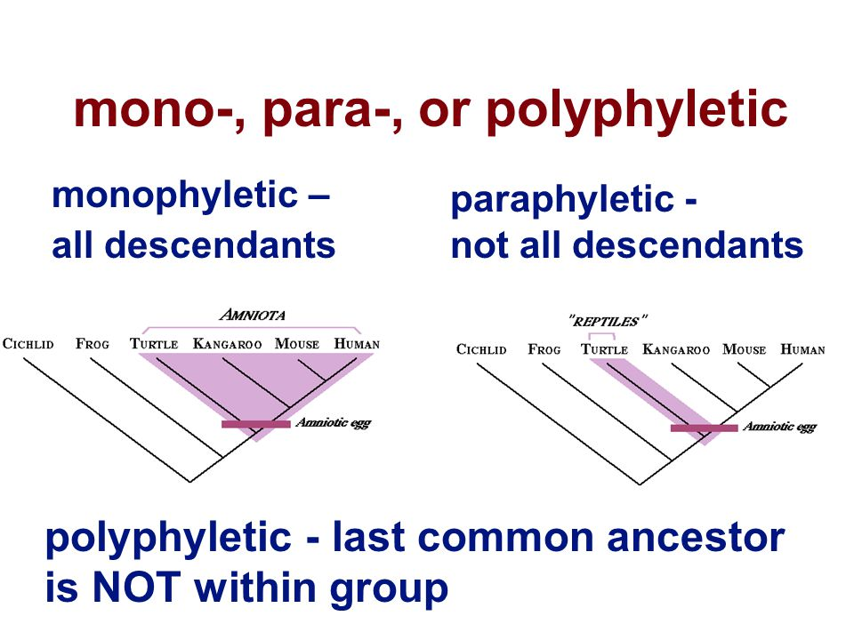 mono-, para-, or polyphyletic monophyletic – all descendants paraphyletic - not all descendants polyphyletic - last common ancestor is NOT within group