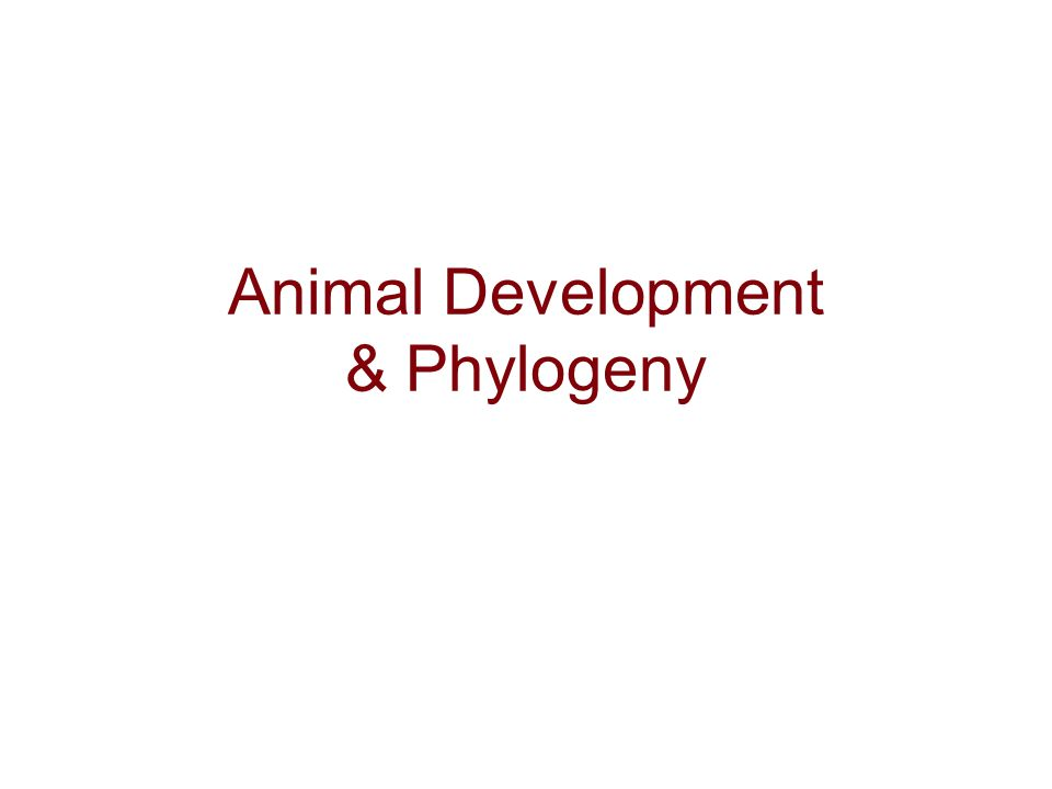 Animal Development & Phylogeny