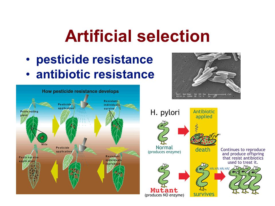 Artificial selection pesticide resistance antibiotic resistance
