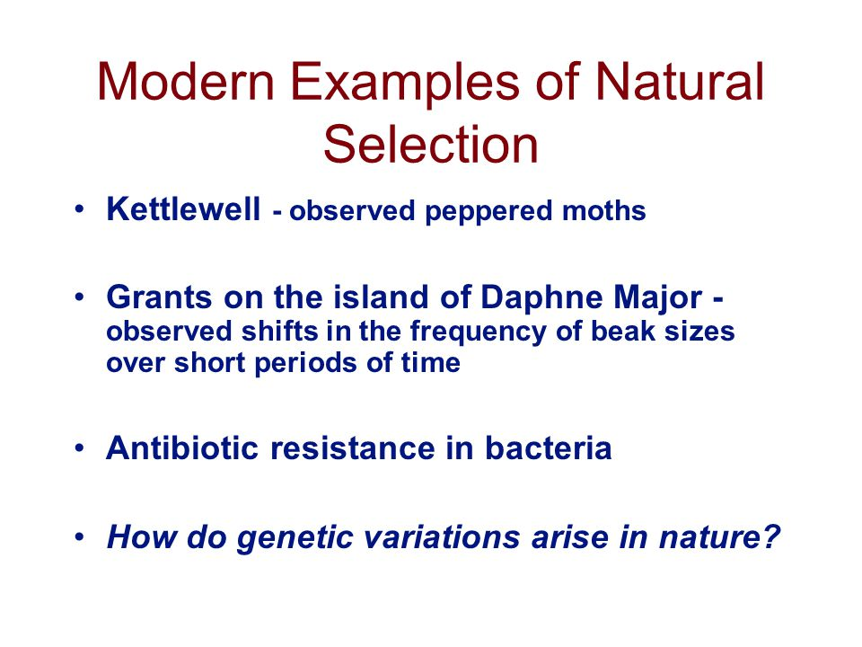 Modern Examples of Natural Selection Kettlewell - observed peppered moths Grants on the island of Daphne Major - observed shifts in the frequency of beak sizes over short periods of time Antibiotic resistance in bacteria How do genetic variations arise in nature