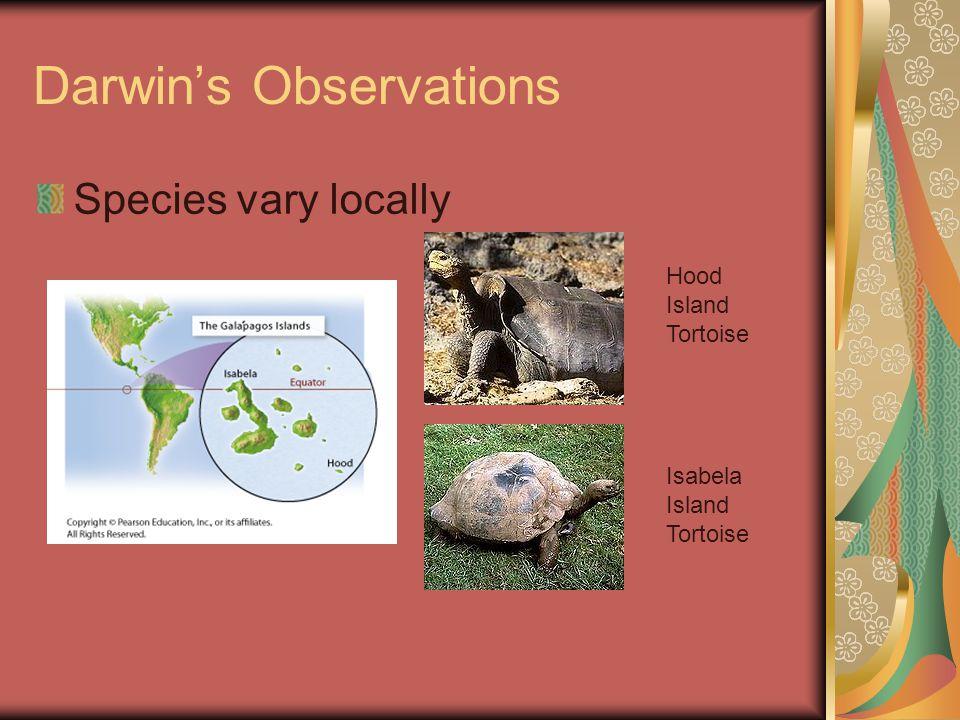 Darwin's Observations Species vary locally Hood Island Tortoise Isabela Island Tortoise