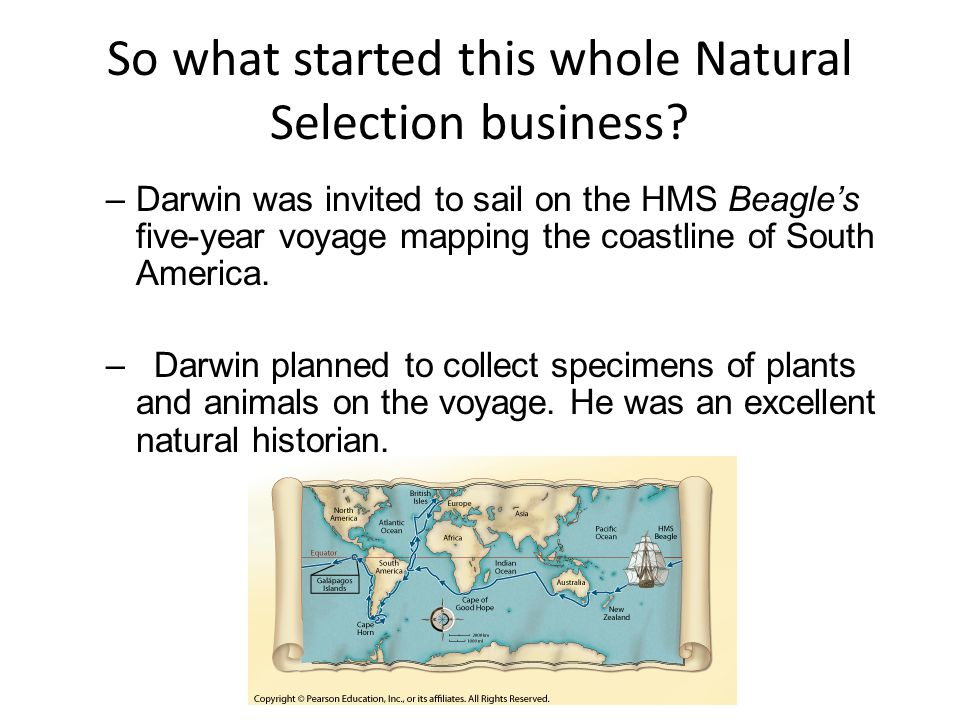 More un-natural selection –Darwin called this selective breeding process artificial selection, a process in which nature provides the variations, and humans select those they find useful.