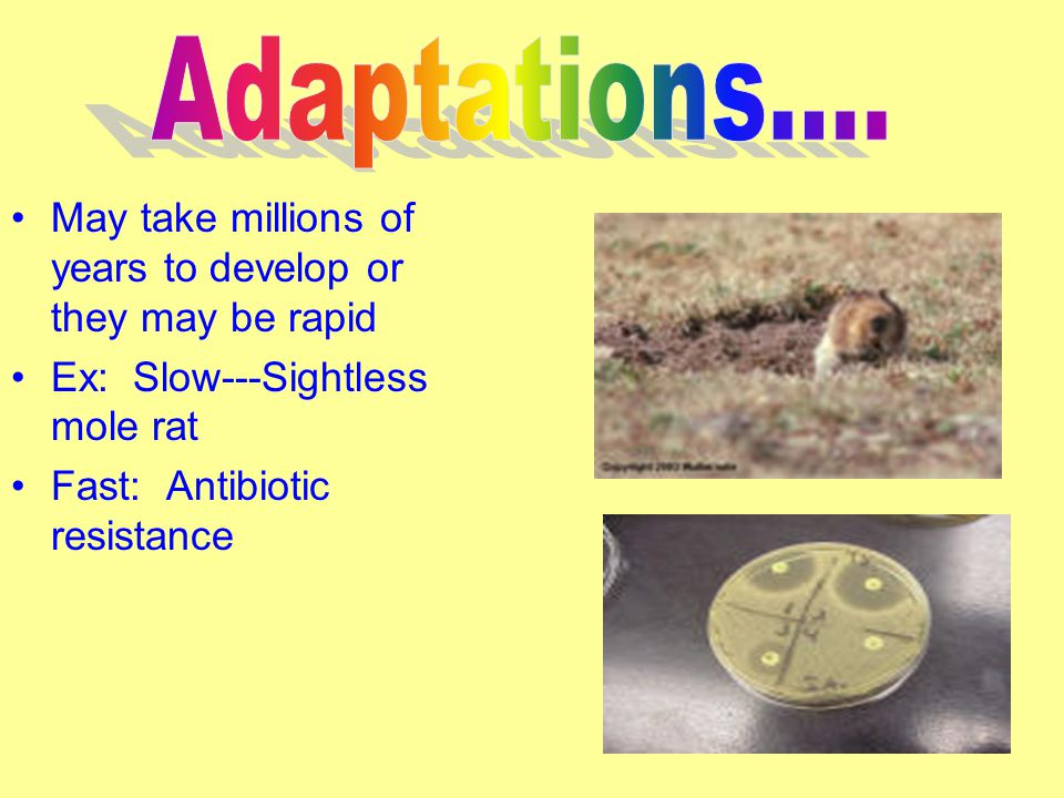 May take millions of years to develop or they may be rapid Ex: Slow---Sightless mole rat Fast: Antibiotic resistance