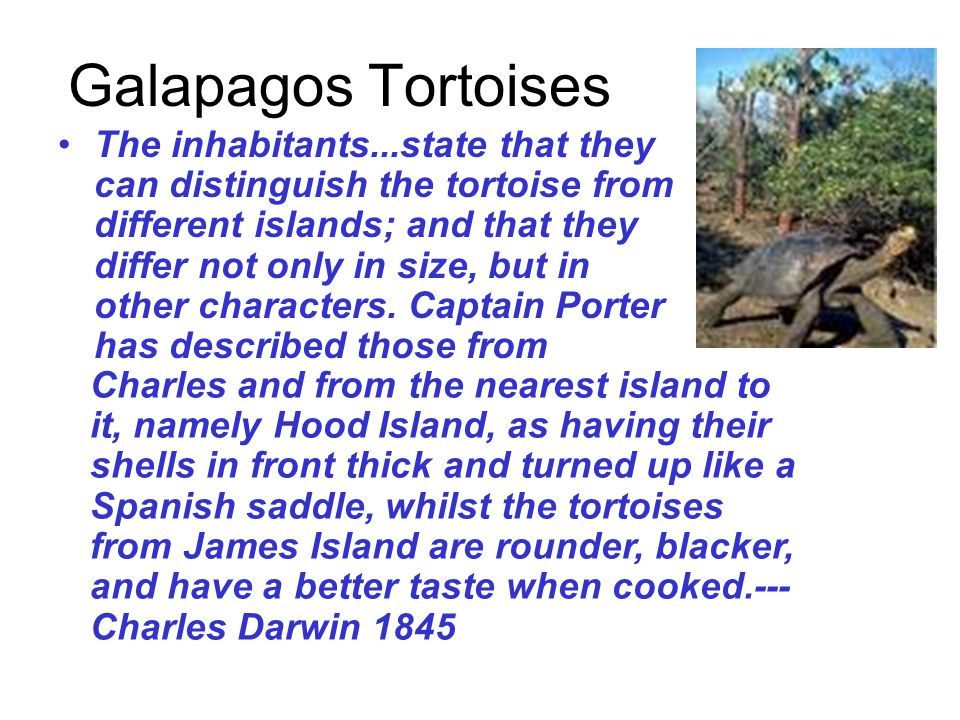 Galapagos Tortoises The inhabitants...state that they can distinguish the tortoise from different islands; and that they differ not only in size, but