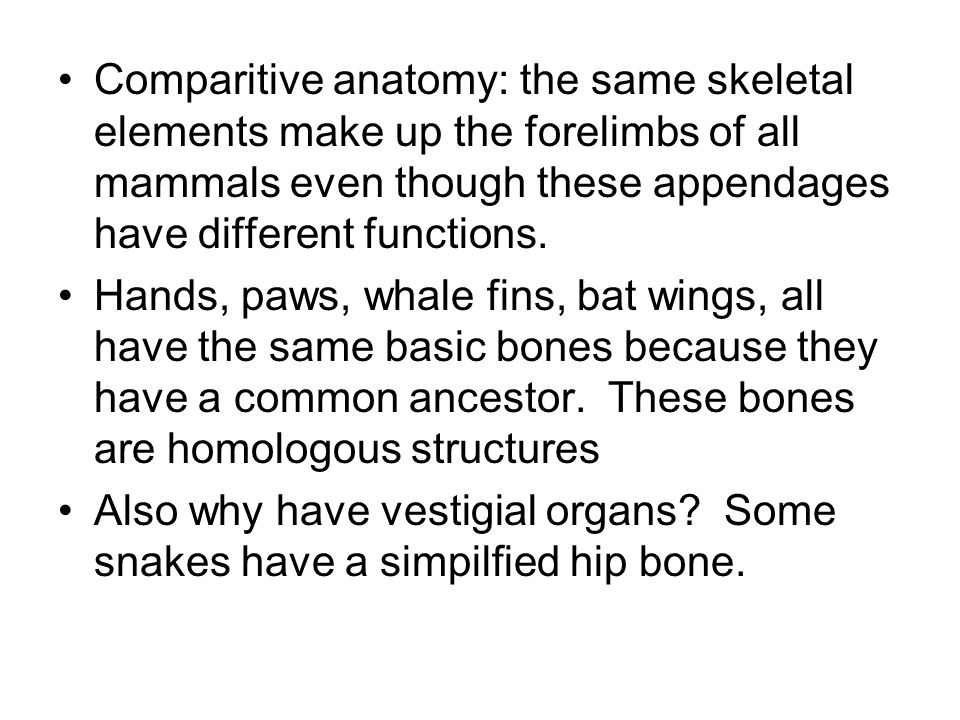 Comparitive anatomy: the same skeletal elements make up the forelimbs of all mammals even though these appendages have different functions.