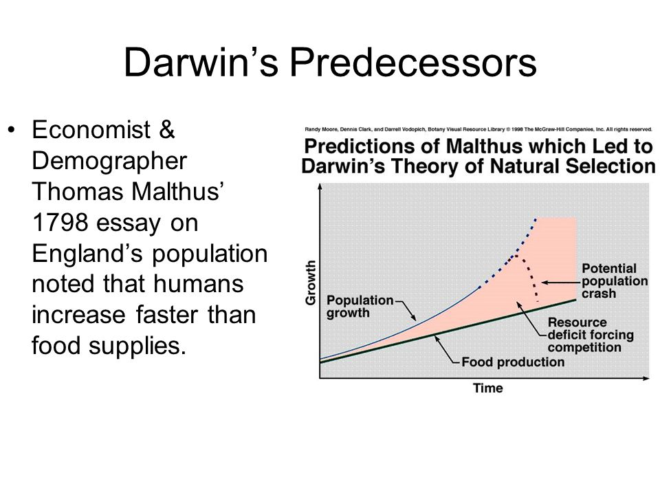 Darwin's Predecessors Economist & Demographer Thomas Malthus' 1798 essay on England's population noted that humans increase faster than food supplies.