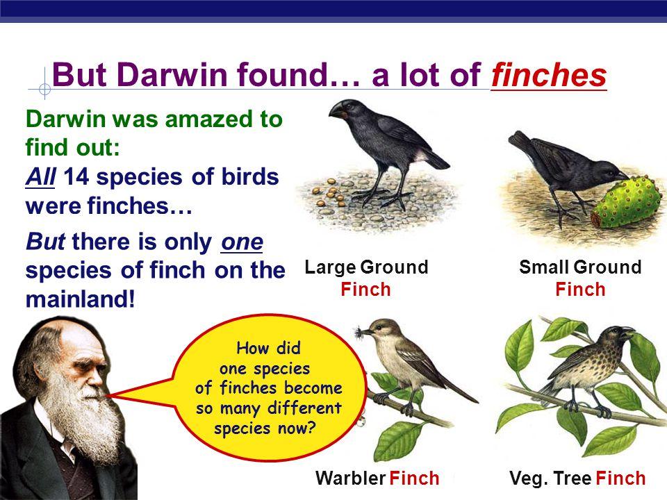 AP Biology Finch Sparrow. Woodpecker. Warbler. Darwin found… birds Finch Sparrow.