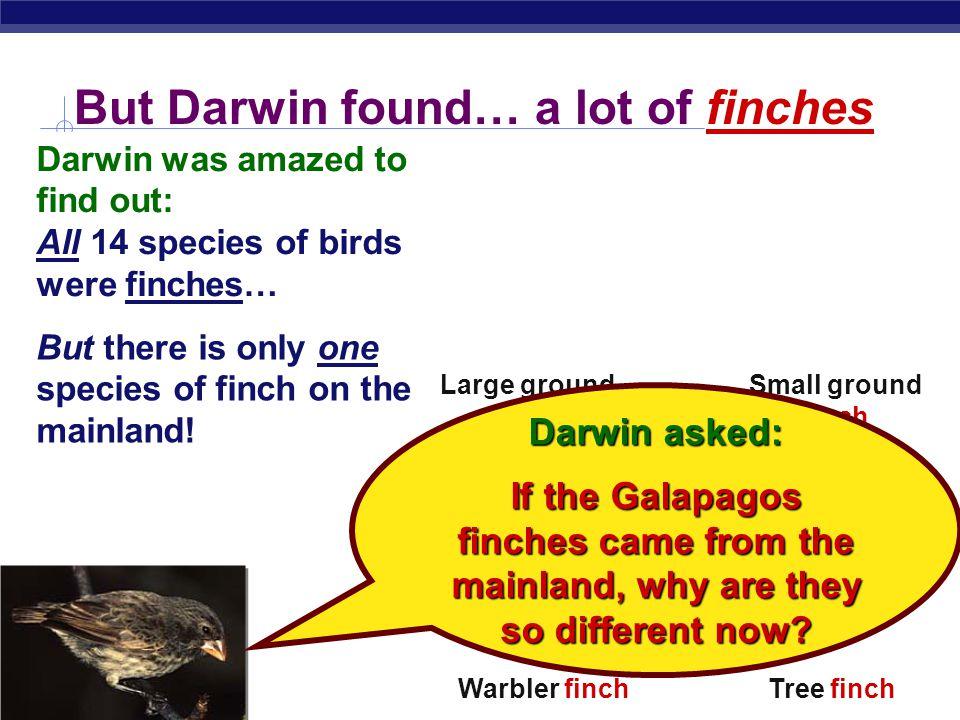 Regents Biology Finch Sparrow. Woodpecker. Warbler.