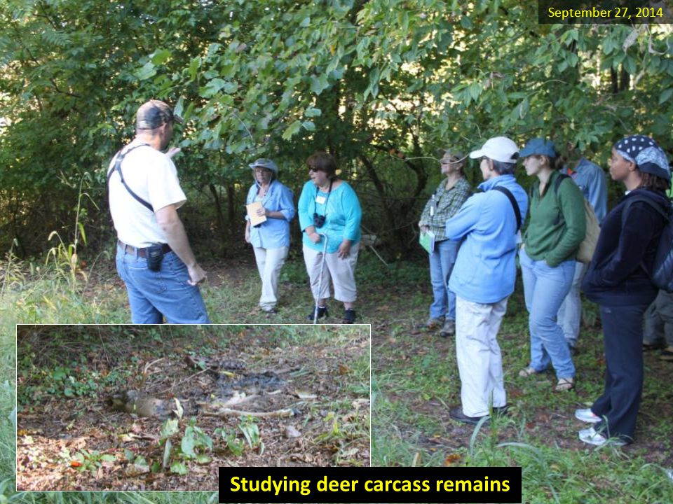Studying deer carcass remains September 27, 2014