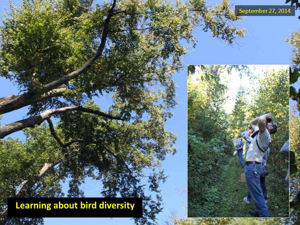 September 27, 2014 Learning about bird diversity