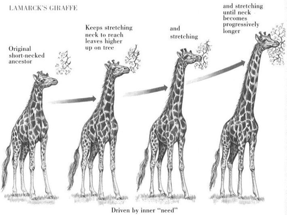 27 Darwin's Theory of Evolution Organisms Change Over Time copyright cmassengale
