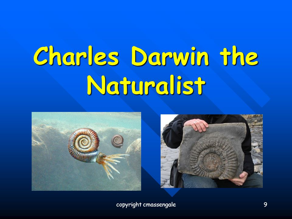 20 Evidence for Evolution – The Fossil Record copyright cmassengale