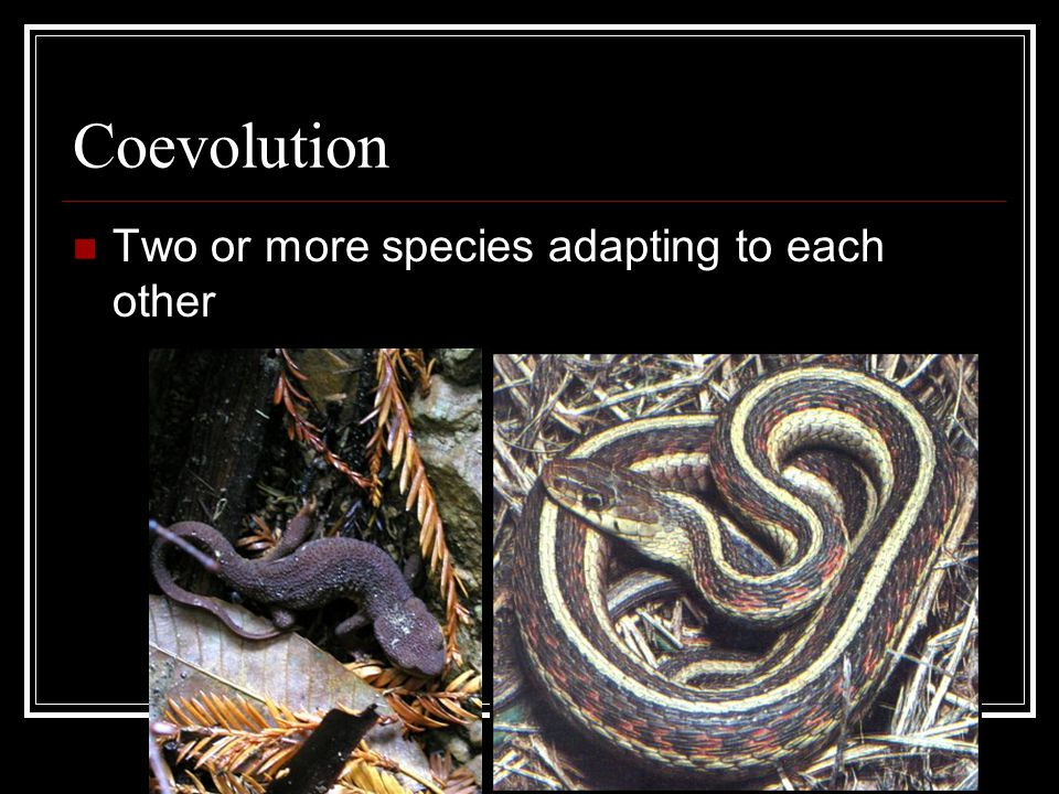 Convergent Evolution Two species develop similar adaptations to the same environment.