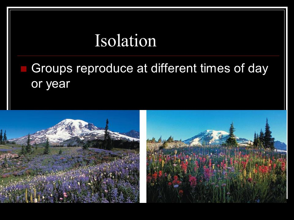 Geographic Isolation Groups are physically separated and no longer interbreed