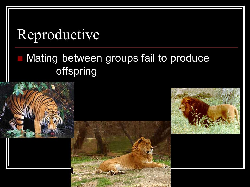 Ecological Isolation Groups are adapted to different habitats, hybrids aren't adapted well to either