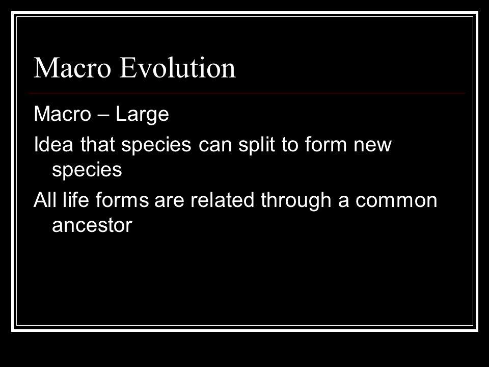 Patterns of Evolution