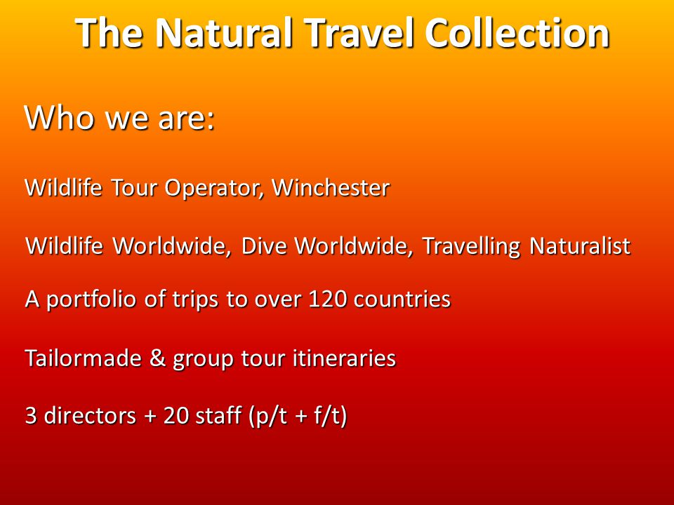 The Natural Travel Collection Wildlife Tour Operator, Winchester Wildlife Worldwide, Dive Worldwide, Travelling Naturalist A portfolio of trips to over 120 countries Tailormade & group tour itineraries 3 directors + 20 staff (p/t + f/t) Who we are: