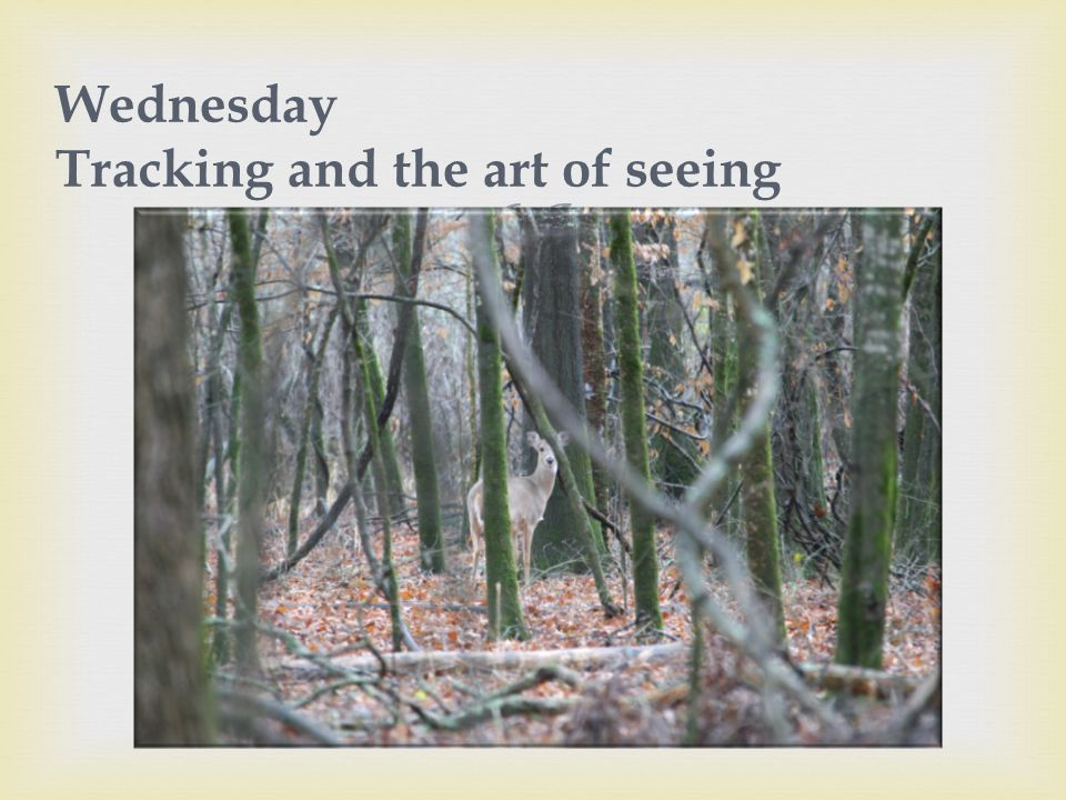  Wednesday Tracking and the art of seeing