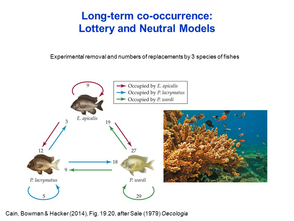 Long-term co-occurrence: Lottery and Neutral Models Cain, Bowman & Hacker (2014), Fig.