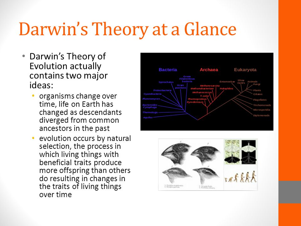 Darwin's Theory at a Glance Darwin's Theory of Evolution actually contains two major ideas: organisms change over time, life on Earth has changed as d