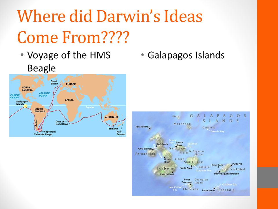 Where did Darwin's Ideas Come From???? Voyage of the HMS Beagle Galapagos Islands