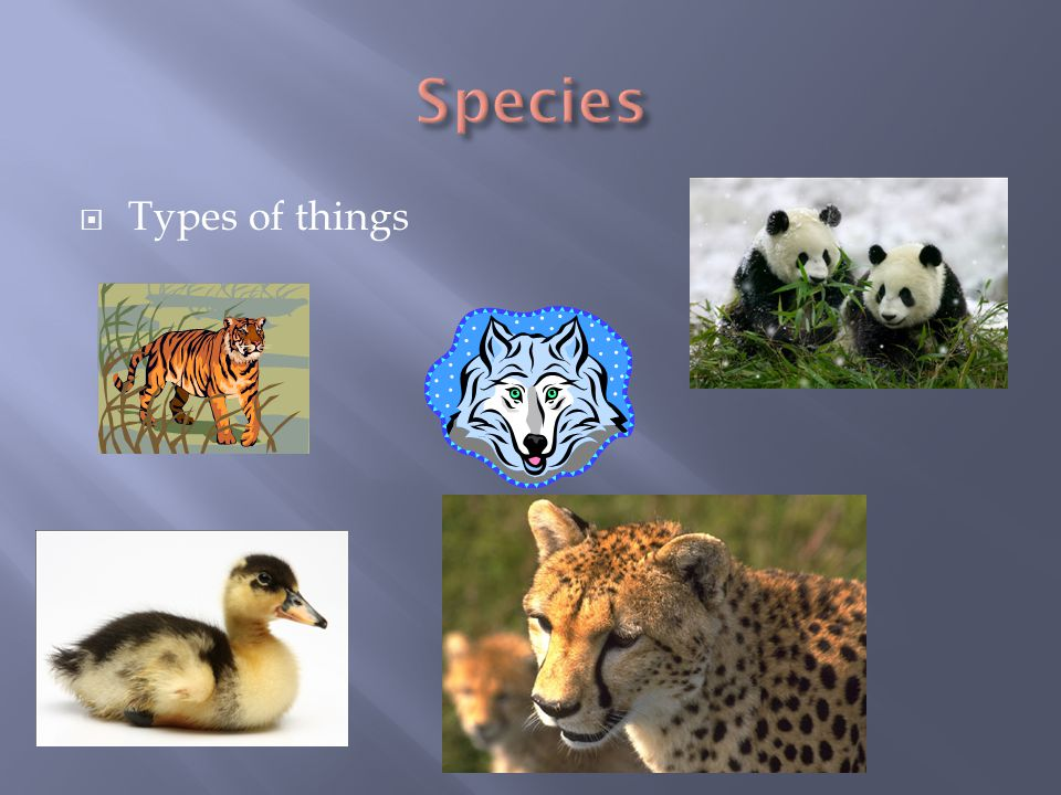  Types of things