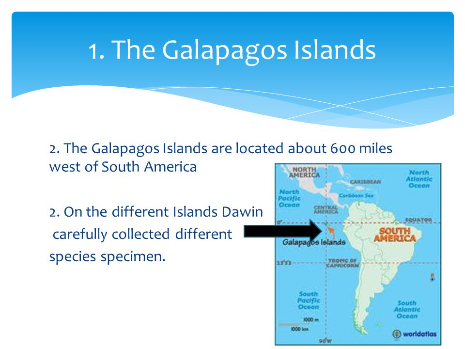 2. The Galapagos Islands are located about 600 miles west of South America 2. On the different Islands Dawin carefully collected different species spe