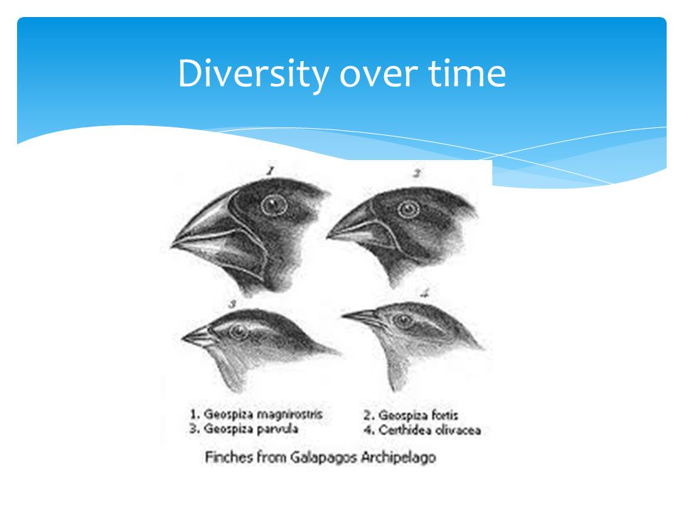 Diversity over time