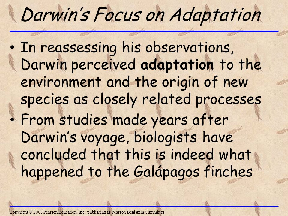 Darwin's Focus on Adaptation In reassessing his observations, Darwin perceived adaptation to the environment and the origin of new species as closely