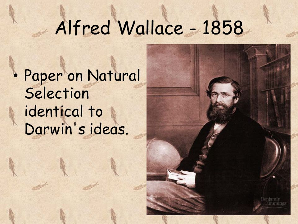 Alfred Wallace - 1858 Paper on Natural Selection identical to Darwin s ideas.