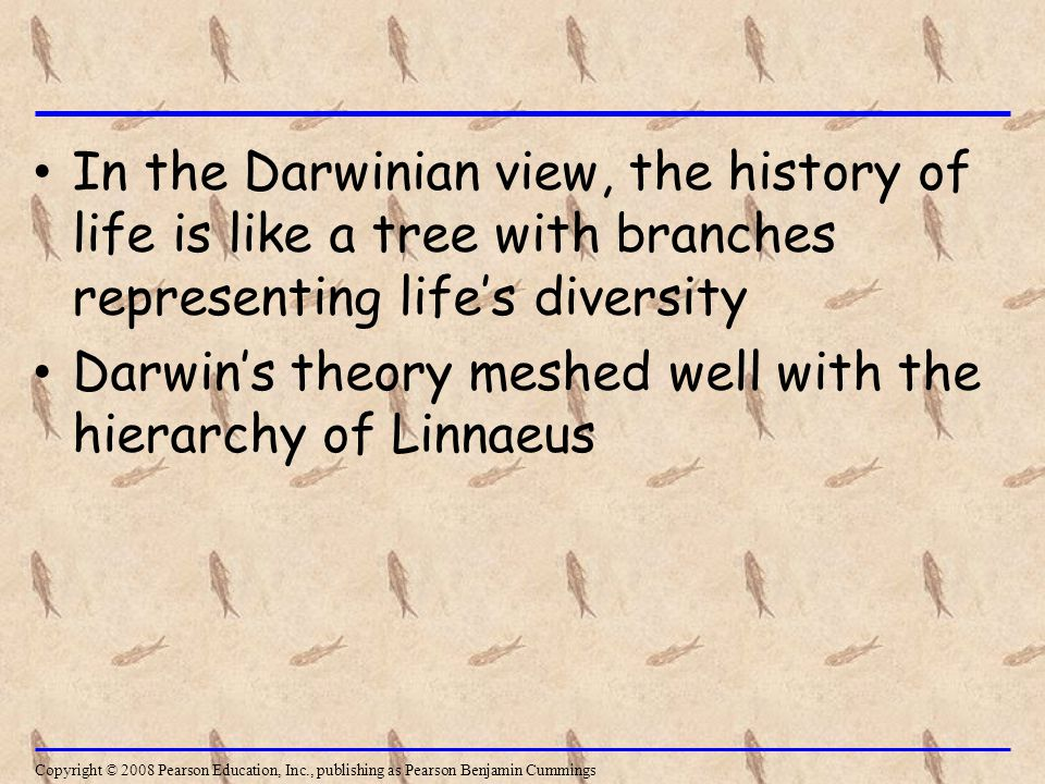 In the Darwinian view, the history of life is like a tree with branches representing life's diversity Darwin's theory meshed well with the hierarchy of Linnaeus Copyright © 2008 Pearson Education, Inc., publishing as Pearson Benjamin Cummings