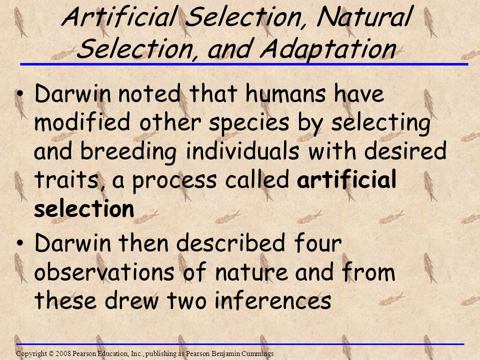 Artificial Selection, Natural Selection, and Adaptation Darwin noted that humans have modified other species by selecting and breeding individuals with desired traits, a process called artificial selection Darwin then described four observations of nature and from these drew two inferences Copyright © 2008 Pearson Education, Inc., publishing as Pearson Benjamin Cummings