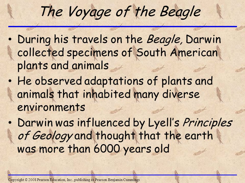 The Voyage of the Beagle During his travels on the Beagle, Darwin collected specimens of South American plants and animals He observed adaptations of