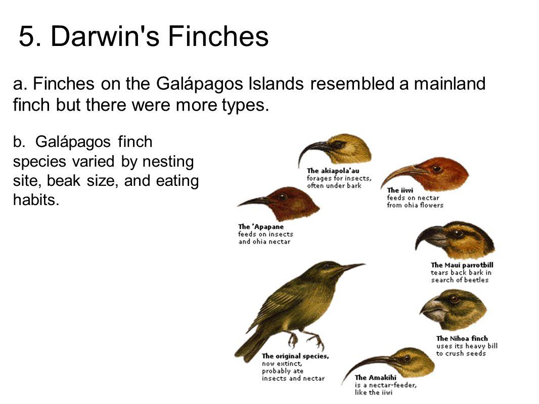 5. Darwin s Finches a.