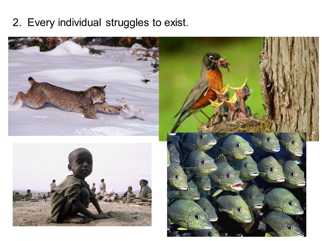 2. Every individual struggles to exist.