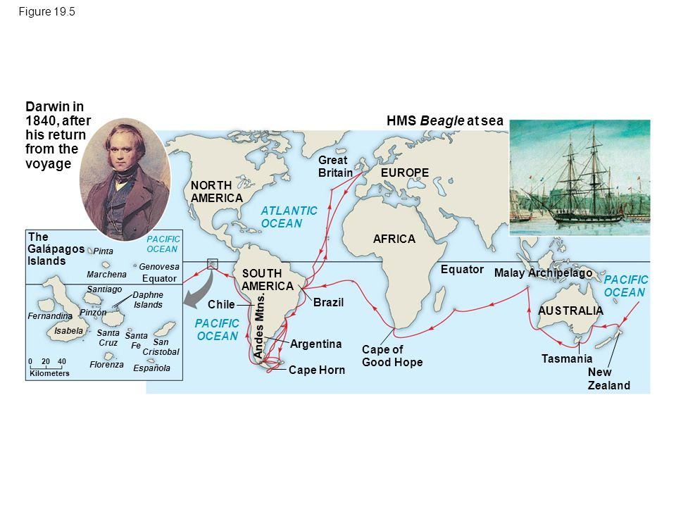 Figure 19.5 HMS Beagle at sea Darwin in 1840, after his return from the voyage NORTH AMERICA Malay Archipelago SOUTH AMERICA Great Britain ATLANTIC OCEAN PACIFIC OCEAN EUROPE AFRICA AUSTRALIA PACIFIC OCEAN Cape of Good Hope Equator Tasmania New Zealand Brazil Argentina Cape Horn Chile Andes Mtns.