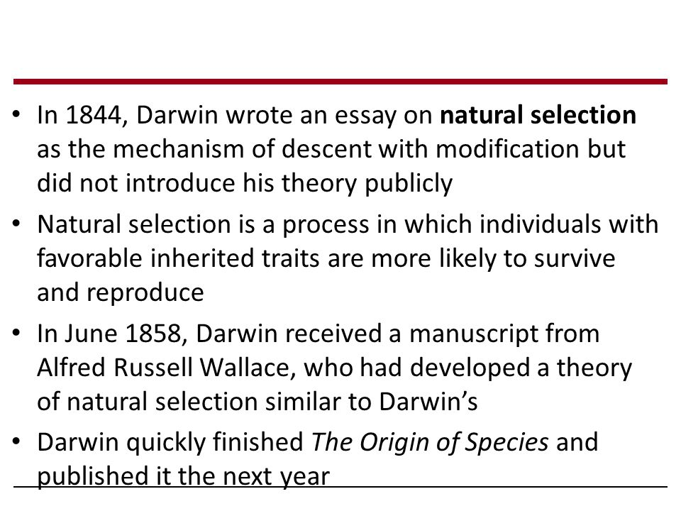 In 1844, Darwin wrote an essay on natural selection as the mechanism of descent with modification but did not introduce his theory publicly Natural selection is a process in which individuals with favorable inherited traits are more likely to survive and reproduce In June 1858, Darwin received a manuscript from Alfred Russell Wallace, who had developed a theory of natural selection similar to Darwin's Darwin quickly finished The Origin of Species and published it the next year