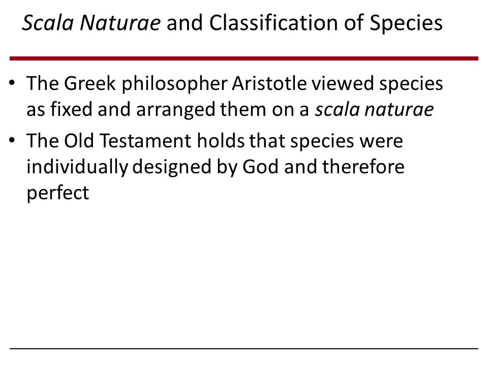 Scala Naturae and Classification of Species The Greek philosopher Aristotle viewed species as fixed and arranged them on a scala naturae The Old Testament holds that species were individually designed by God and therefore perfect