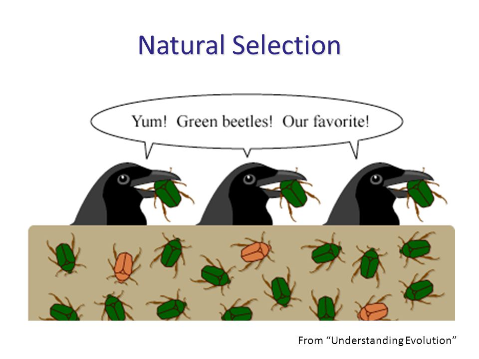 Natural Selection From Understanding Evolution