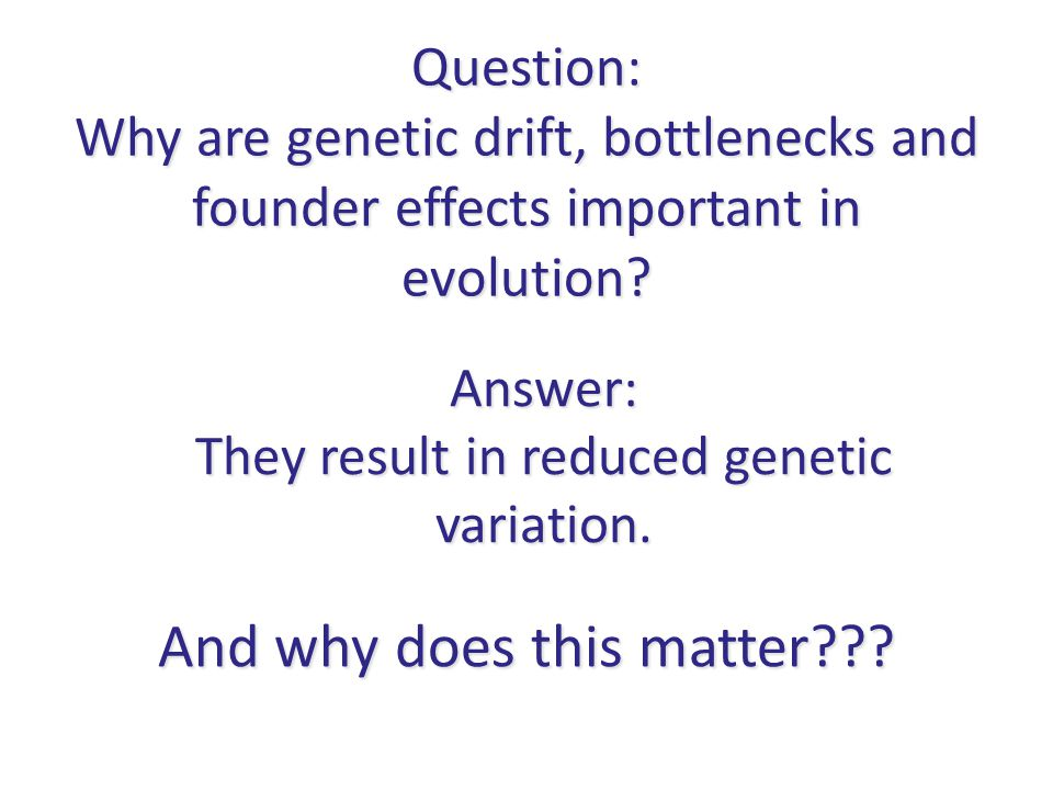 Question: Why are genetic drift, bottlenecks and founder effects important in evolution? Answer: They result in reduced genetic variation. And why doe
