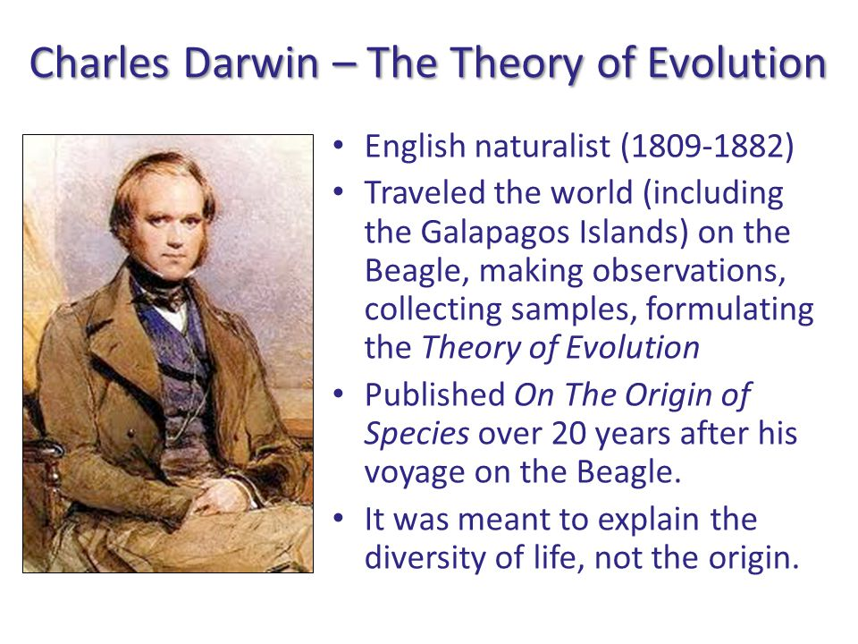 Charles Darwin – The Theory of Evolution English naturalist (1809-1882) Traveled the world (including the Galapagos Islands) on the Beagle, making observations, collecting samples, formulating the Theory of Evolution Published On The Origin of Species over 20 years after his voyage on the Beagle.