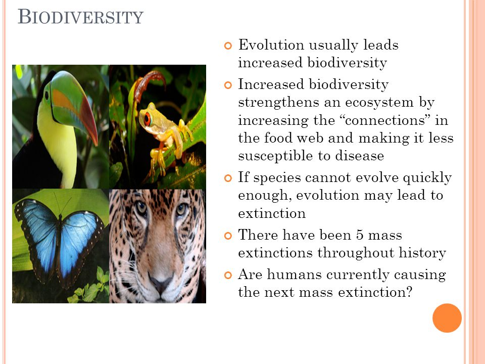 """B IODIVERSITY Evolution usually leads increased biodiversity Increased biodiversity strengthens an ecosystem by increasing the """"connections"""" in the fo"""