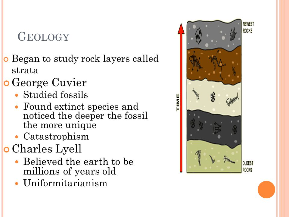 G EOLOGY Began to study rock layers called strata George Cuvier Studied fossils Found extinct species and noticed the deeper the fossil the more uniqu