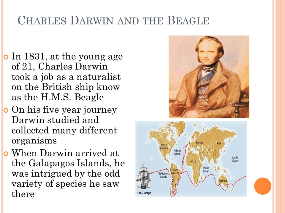 C HARLES D ARWIN AND THE B EAGLE In 1831, at the young age of 21, Charles Darwin took a job as a naturalist on the British ship know as the H.M.S. Bea