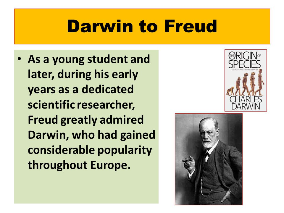 Darwin to Freud As a young student and later, during his early years as a dedicated scientific researcher, Freud greatly admired Darwin, who had gained considerable popularity throughout Europe.