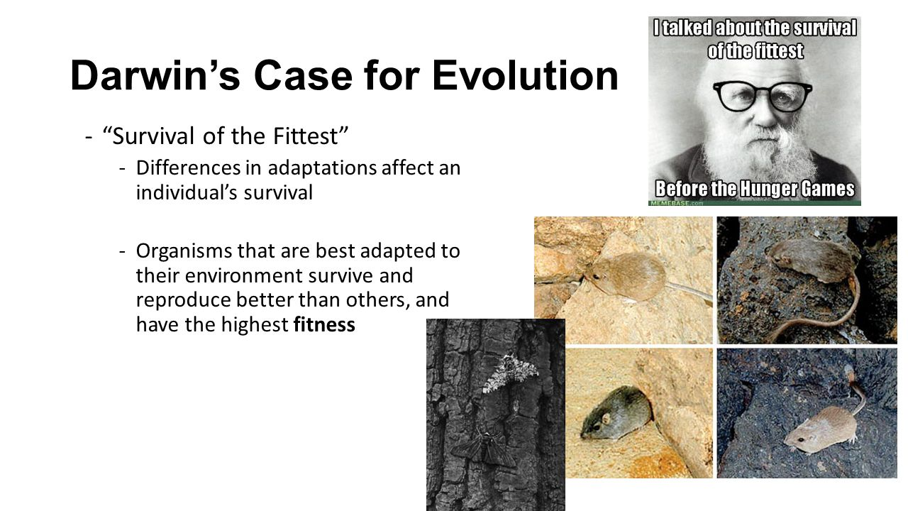 "Darwin's Case for Evolution -""Survival of the Fittest"" -Differences in adaptations affect an individual's survival -Organisms that are best adapted to"