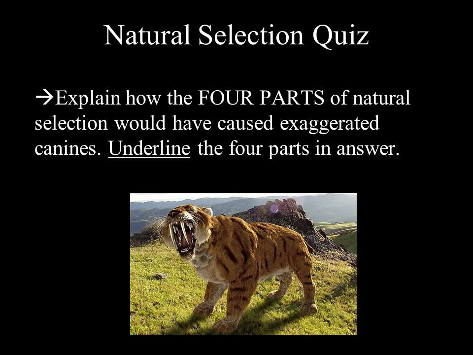 Natural Selection Quiz  Explain how the FOUR PARTS of natural selection would have caused exaggerated canines.