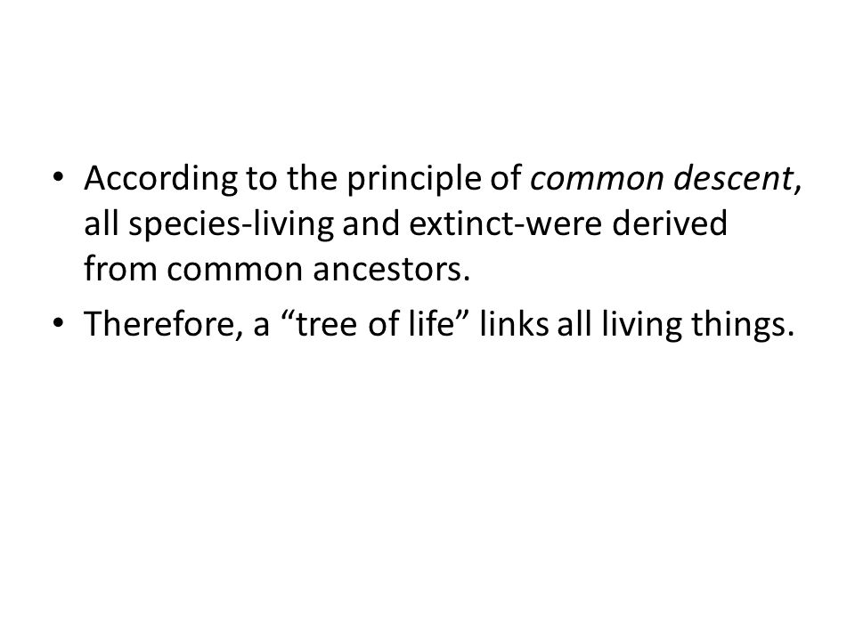 """According to the principle of common descent, all species-living and extinct-were derived from common ancestors. Therefore, a """"tree of life"""" links all"""