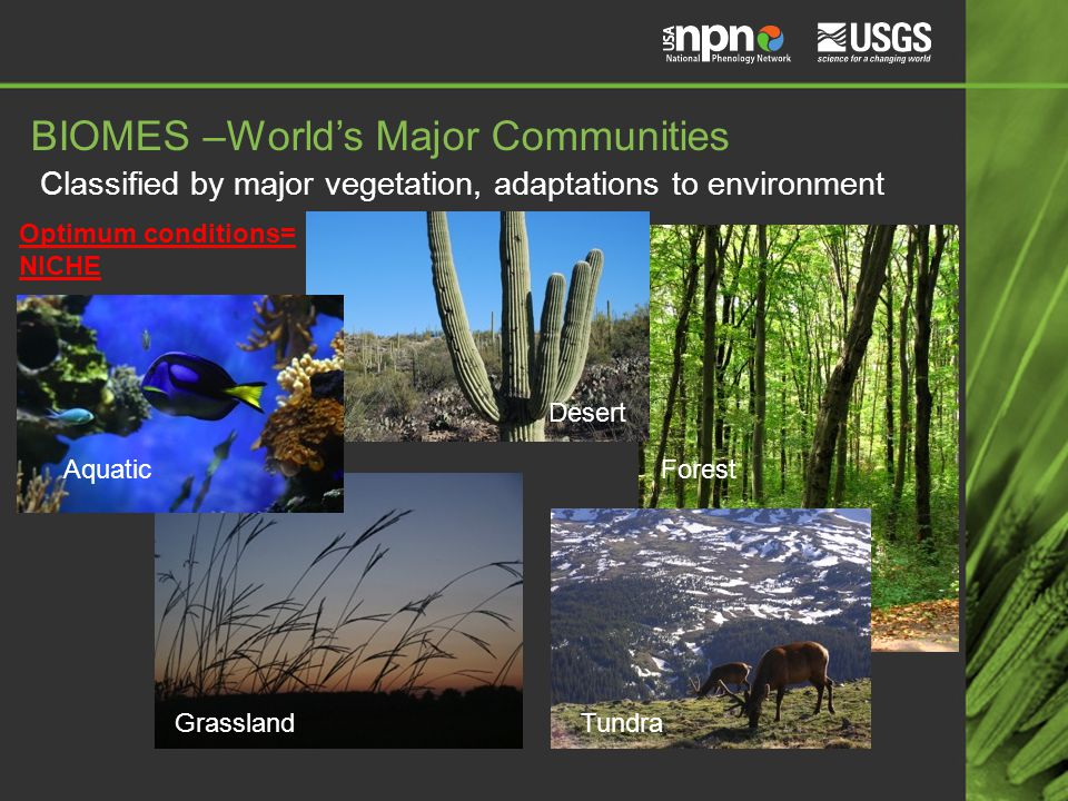 BIOMES –World's Major Communities Classified by major vegetation, adaptations to environment Aquatic Grassland Desert Forest Tundra Optimum conditions= NICHE