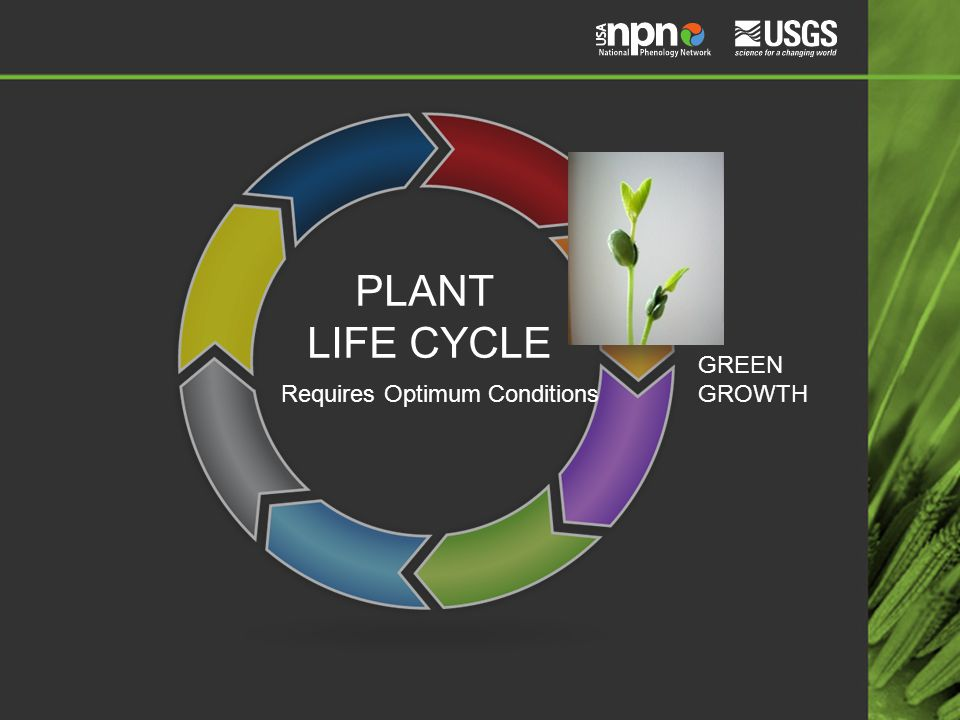 PLANT LIFE CYCLE GREEN GROWTH Requires Optimum Conditions